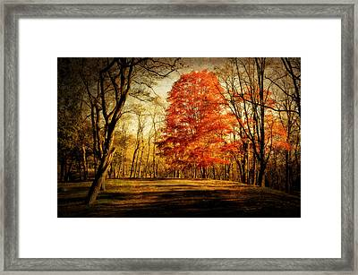 Autumn Trail Framed Print by Kathy Jennings