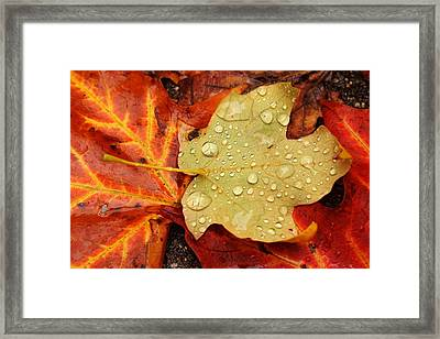 Autumn Treasures Framed Print by Matthew Green