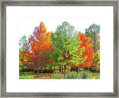 Autumn Trees Framed Print by Evgeniya Sohn Bearden