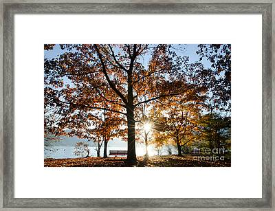 Autumn Trees Framed Print by Mats Silvan