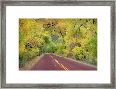 Autumn Trees On Road Framed Print by Royce Bair