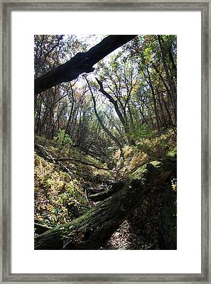 Autumn Valley Framed Print by Rick Rauzi