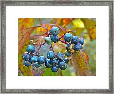 Autumn Viburnum Berries Series #4 Framed Print by Mother Nature
