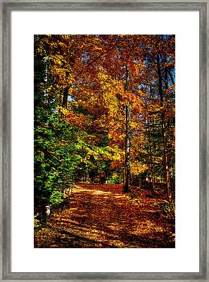 Autumn Walk Framed Print by David Patterson
