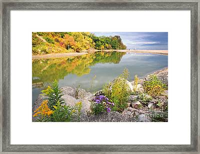 Autumn Wildflower And Reflections Framed Print by Charline Xia