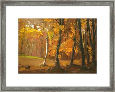 Autumn Woods 5 Framed Print by Paul Mitchell