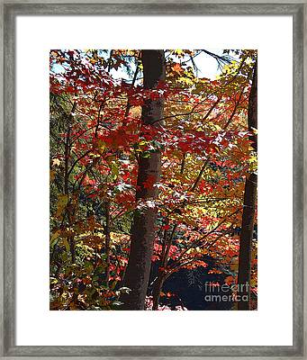 Autumn's Delight Framed Print by Diane E Berry