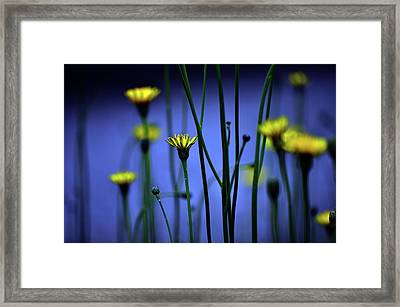 Avatar Flowers Framed Print by Mauro Cociglio - Turin - Italy