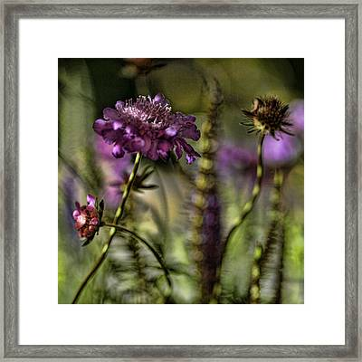 Awakening Framed Print by Bonnie Bruno