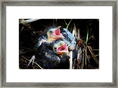Baby Bird Framed Print by Gabriel Pevide