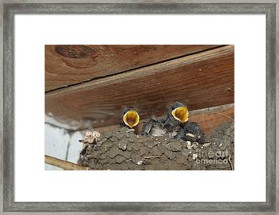 Baby Birds  Picture Framed Print by Preda Bianca