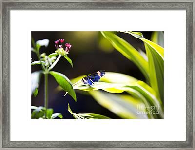 Baby Blue Framed Print by Leslie Leda
