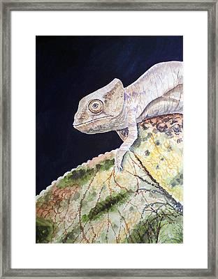 Baby Chameleon Framed Print by Irina Sztukowski
