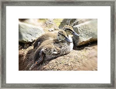 Baby Duckies  Framed Print by Saija  Lehtonen