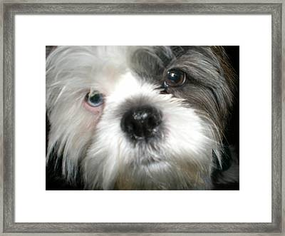 Baby Face Dog Framed Print by Sherry Hunter