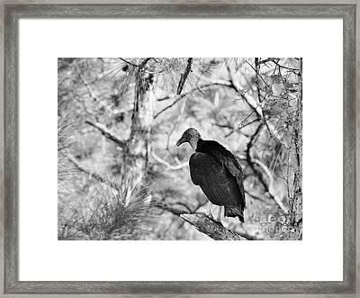 Back In Black Framed Print by Lynda Dawson-Youngclaus