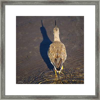 Back Side Framed Print by Roena King