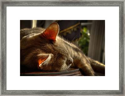 Backlit Ears Framed Print by David Patterson