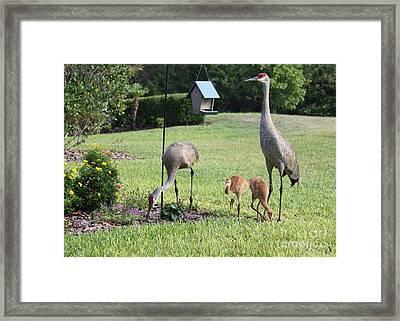Backyard Birds Framed Print by Carol Groenen