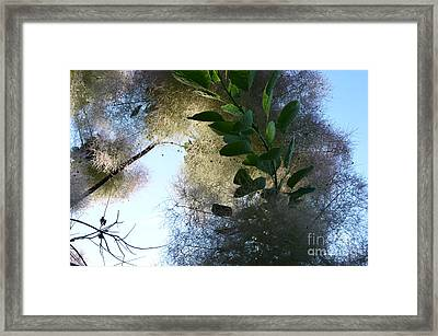 Backyard Dreams  Framed Print by Bruno Santoro