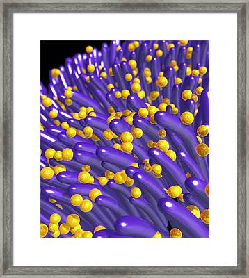 Bacteria On Lung Hairs Framed Print by Roger Harris