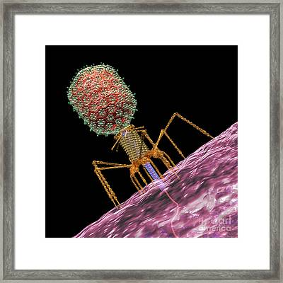 Bacteriophage T4 Injecting Framed Print by Russell Kightley