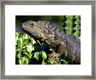 Balance Of Scales Framed Print by Karen Wiles