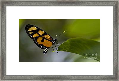 Balancing Act Framed Print by Heather Applegate