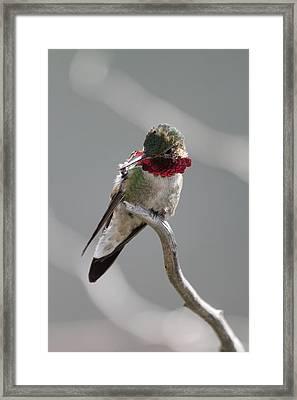 Balancing Act Framed Print by Shane Bechler