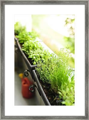 Balcony Herb Garden Framed Print by Elena Elisseeva