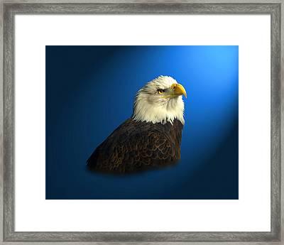 Bald Eagle - Blyth - In Captivity Framed Print by J Larry Walker