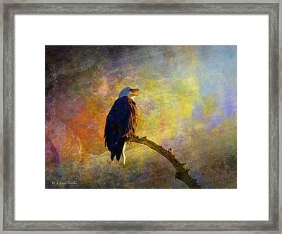 Bald Eagle Awaiting Sunrise Framed Print by J Larry Walker