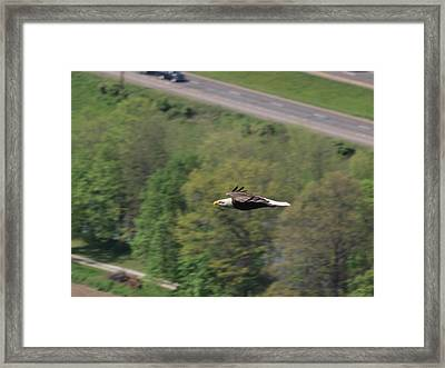 Bald Eagle In Flight One Framed Print by Joshua House