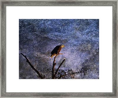 Bald Eagle In Suspense Framed Print by J Larry Walker