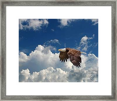 Bald Eagle In The Clouds Framed Print by Dale Erickson