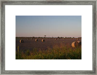 Bales In Peanut Field 1 Framed Print by Douglas Barnett