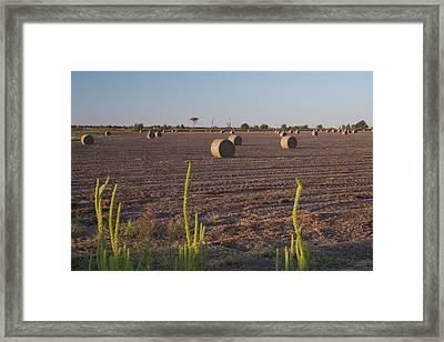 Bales In Peanut Field 12 Framed Print by Douglas Barnett