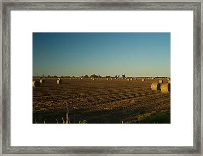 Bales In Peanut Field 9 Framed Print by Douglas Barnett