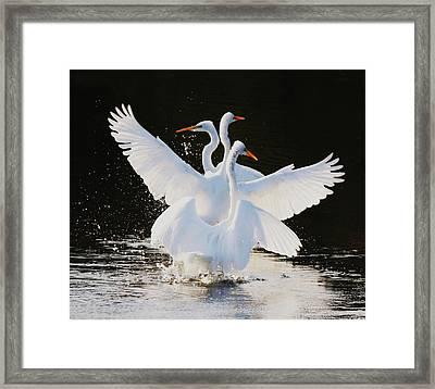 Ballet Framed Print by Paulette Thomas