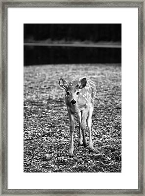 Bambi In Black And White Framed Print by Sebastian Musial