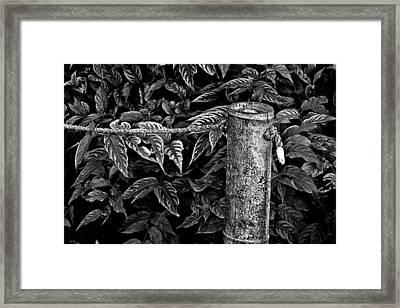 Bamboo Border Framed Print by Burney Lieberman