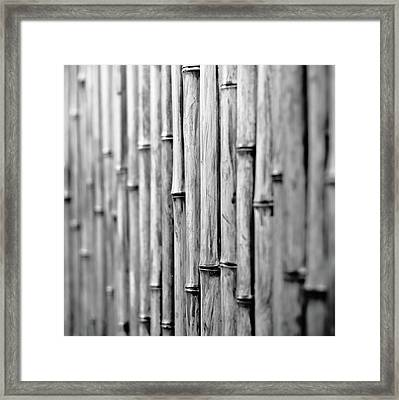 Bamboo Fence Framed Print by George Imrie Photography