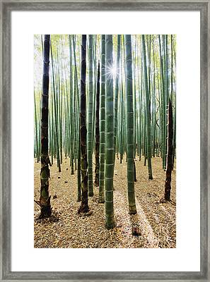 Bamboo Forest Framed Print by Jeremy Woodhouse