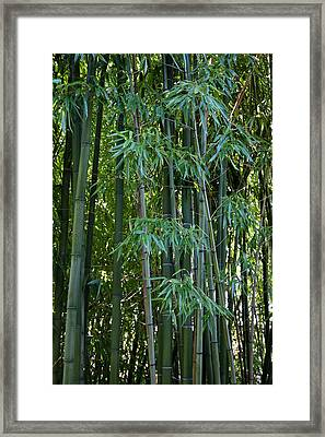 Bamboo Tree Framed Print by Athena Mckinzie