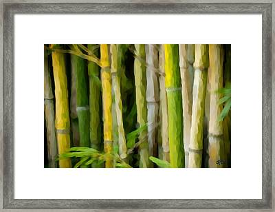 Bamboo Zen Framed Print by Paul Bartoszek