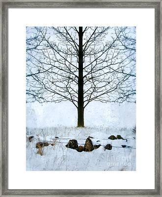 Bare Tree In Winter Framed Print by Jill Battaglia
