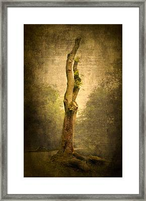 Bare Tree Framed Print by Svetlana Sewell