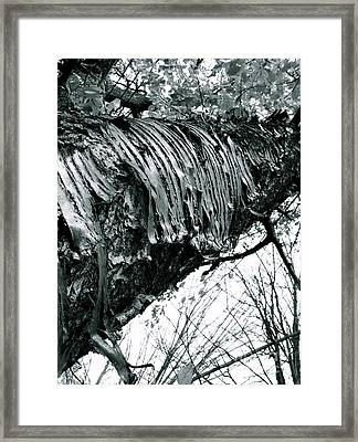 Barking Up At The Sky Framed Print by Trish Hale