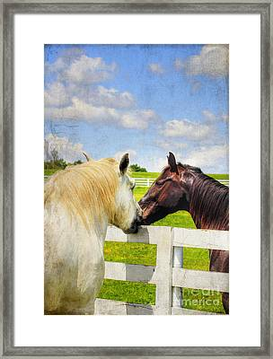 Barn Yard Kisses Framed Print by Darren Fisher