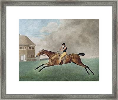 Baronet Framed Print by George Stubbs